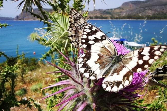 Εκατοντάδες εντυπωσιακές πεταλούδες γέμισαν το Ναύπλιο [εικόνες]