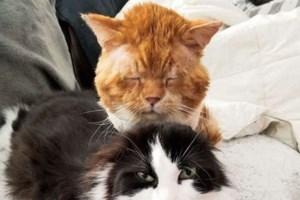 Βόλος: Χειροπέδες και πρόστιμο 30.000 ευρώ σε 88χρονο που σκότωσε και πέταξε γάτα στα σκουπίδια