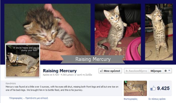 Δίποδο γατάκι δίνει μαθήματα ζωής - εικόνα 3