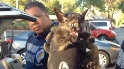Πυροσβέστες σώζουν γατάκι από κινητήρα Ι.Χ.
