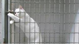 gatos-basilias-twn-apodrasewn