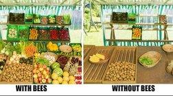 Δεν «πετά πετά» η μέλισσα... από τα χημικά