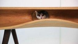 CATable: Αν δεν το αγοράσετε οι γάτες σας θα σας μισήσουν