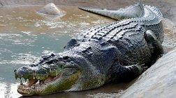 australia-nekros-o-krokodeilos-pou-katasparakse-62xrono-andra