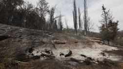 Σε πύρινο κλοιό η Ελλάδα: Oι φωτιές απειλούν σπίτια