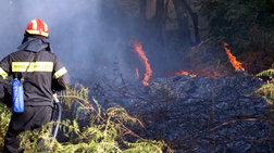 Αναζωπύρωση της φωτιάς στη Μαλεσίνα