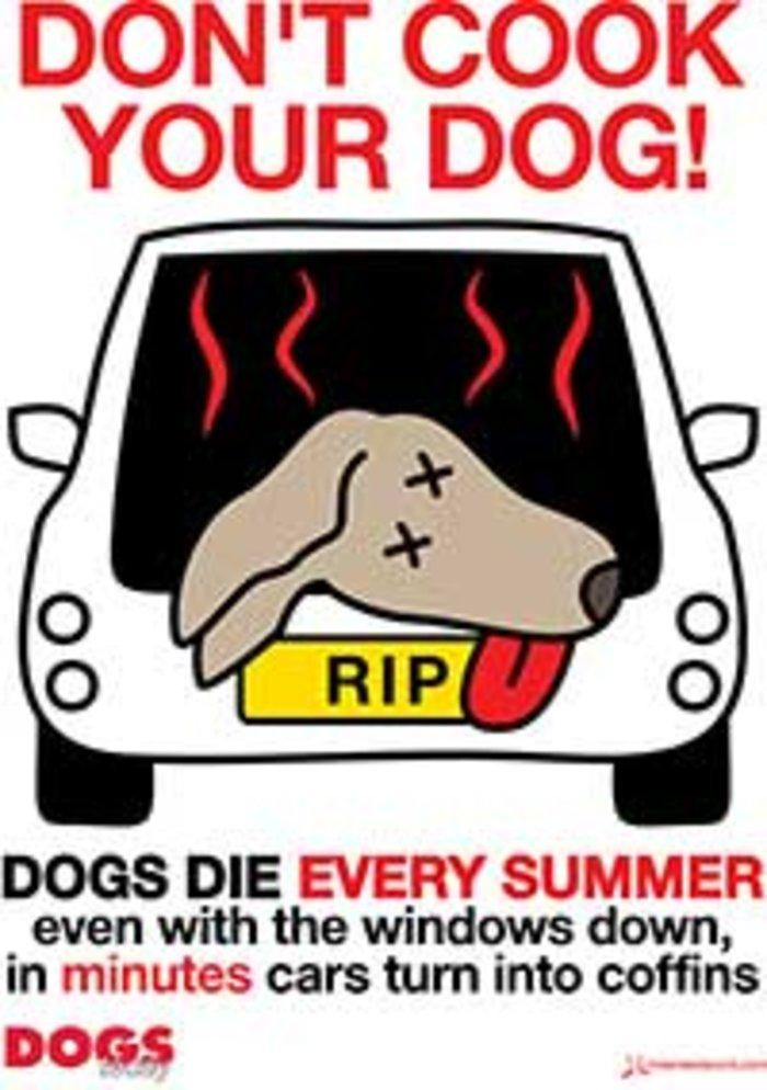 «Μην μαγειρεύεται το σκύλο σας», λέει η καμπάνια κατά της θερμοπληξίας