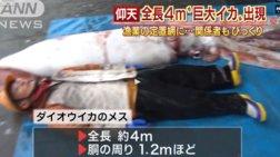 Καλαμάρι γίγας στην Ιαπωνία