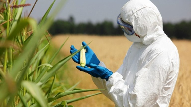 Από το 2015 θα επιτρέπεται η καλλιέργεια μεταλλαγμένων φυτών στην ΕΕ