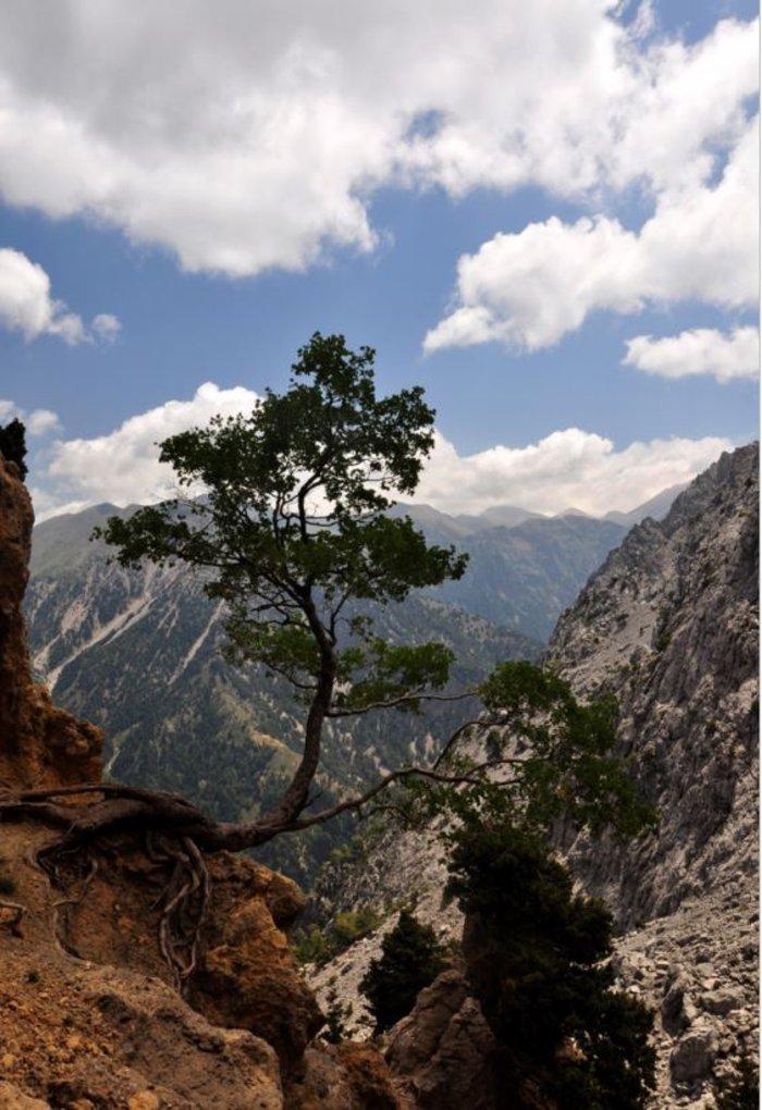 Ημερολόγια πεζοπορίας: στα άγρια Λευκά Όρη - εικόνα 7
