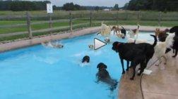 skulia-kanoun-pool-party