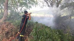 Υπό έλεγχο η πυρκαγιά στο Δαμάσι Λάρισας