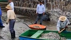 Ξεβράστηκαν 48 τόνοι νεκρών ψαριών στο Μεξικό