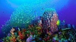 SOS για τους ωκεανούς από τους επιστήμονες