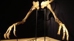 Ο δεινόσαυρος με τα μεγαλύτερα χέρια στη γη