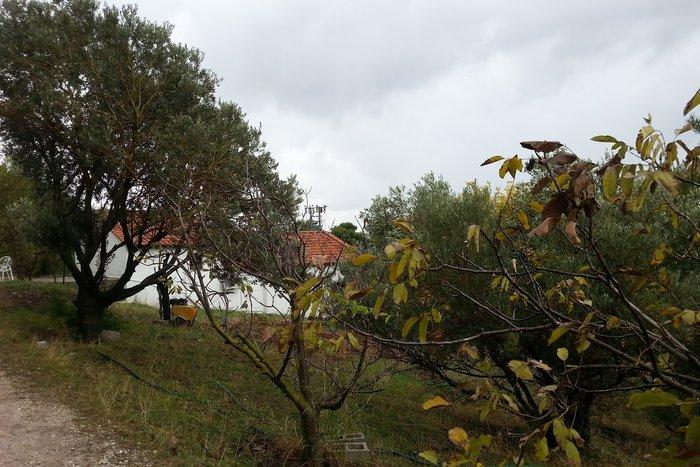 Το σπίτι στο οικόπεδο στο Κεφαλάρι