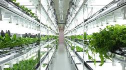 Δείτε τα... 64bit λαχανικά που καλλιεργεί η Toshiba