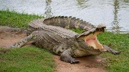 mozambiki-mpura-me-xoli-krokodeilou-skotwse-56-anthrwpous