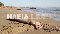 Γιγαντιαίο καλαμάρι ξεβράστηκε σε παραλία της Ηλείας
