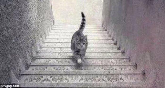 Η φωτογραφία που διχάζει: Η γάτα ανεβαίνει ή κατεβαίνει;