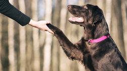 Πότε ο άνθρωπος εξημέρωσε το σκύλο;