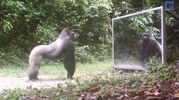 Ξεκαρδιστικό βίντεο: Ζώα βλέπουν τον εαυτό τους στον καθρέφτη