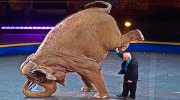 elefantina---drapetis-apo-tsirko-skotwse-peripatiti