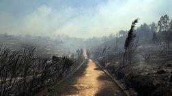 Οι εμπρηστές, τα καλώδια, οι άνεμοι:Οι συνήθεις υποπτοι για την καταστροφή