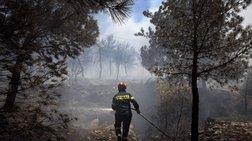 Από εμπρησμούς προκαλείται το 80% των δασικών πυρκαγιών