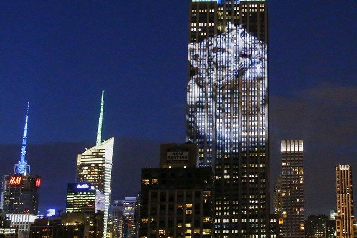 Ο Σεσίλ στο πιό εμβληματικό κτίριο της Νέας Υόρκης