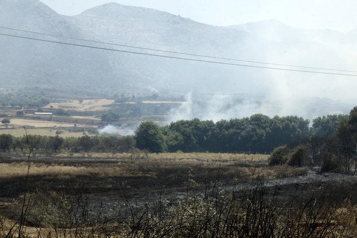 Καμένη γη από τη μεγάλη πυρκαγιά στην Αιτωλοακαρνανία [Εικόνες] - εικόνα 4