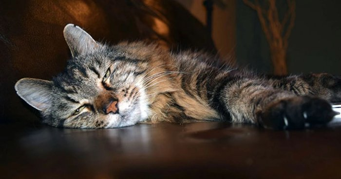 Γάτος ετών 26! Τα μυστικά της μακροζωίας
