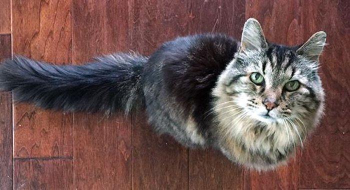 Γάτος ετών 26! Τα μυστικά της μακροζωίας - εικόνα 2