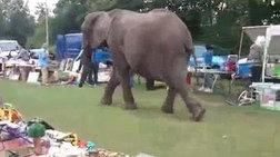 yperoxo-binteo-elefantas-paei-bolta-stin-agora