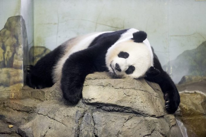 Χαρές για δίδυμα πάντα σε ζωολογικό κήπο της Ουάσιγκτον