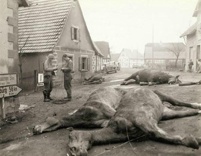 Συγκλονιστικές φωτογραφίες από τη φρίκη του Β' Παγκοσμίου Πολέμου - εικόνα 3