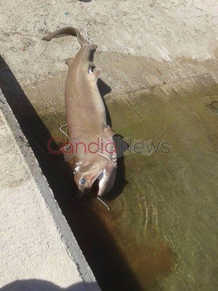Ψάρεψαν καρχαρία 3 μέτρων στη Νότια Κρήτη! [Φωτό]