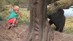 2χρονος γορίλας παίζει κρυφτούλι με 2χρονο αγόρι σε ένα αξιολάτρευτο βίντεο