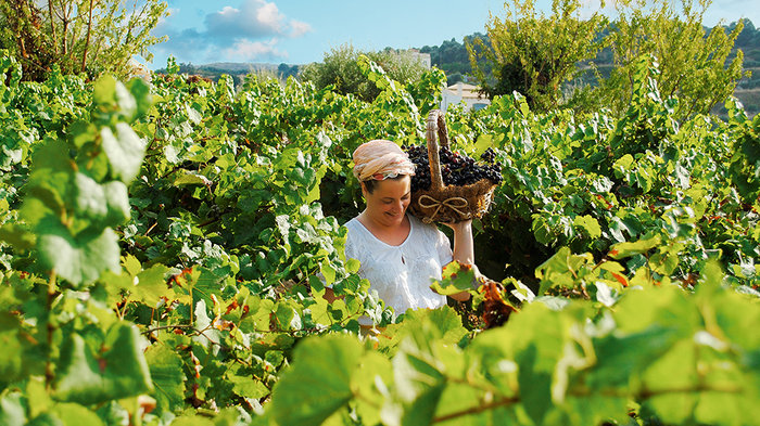 Αφιέρωμα του Guardian: Γίνε γεωργός για μία μέρα στην Κρήτη - εικόνα 9