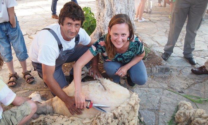 Η Emily Payne κουρεύει πρόβατο