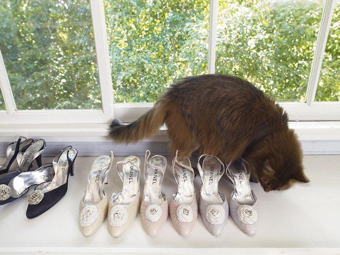 Μια γάτα επιθεωρεί τη συλλογή από τα Chanel παπούτσια της αξέχαστης Λιζ