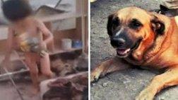 Σκυλίτσα θήλαζε εγκαταλελειμμένο 2χρονο αγοράκι: συγκλονιστικές φωτό