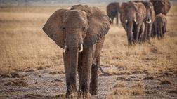 stous-elefantes-isws-krubetai-i-therapeia-tou-karkinou