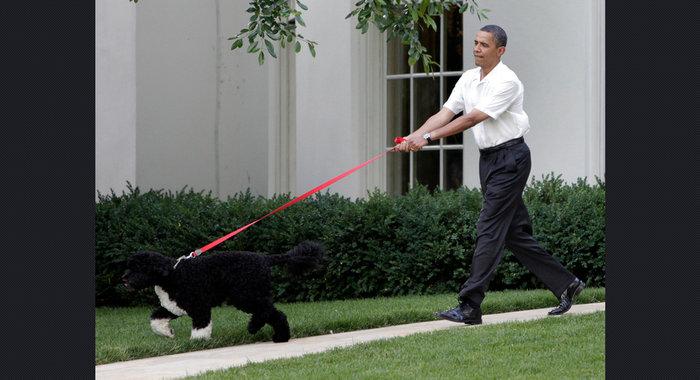 Ο σκύλος των Ομπάμα που κάνει «άνω κάτω» το Λευκό Οίκο