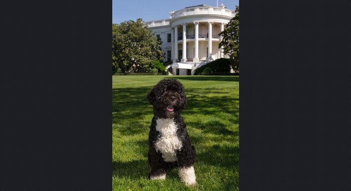 Ο σκύλος των Ομπάμα που κάνει «άνω κάτω» το Λευκό Οίκο - εικόνα 4
