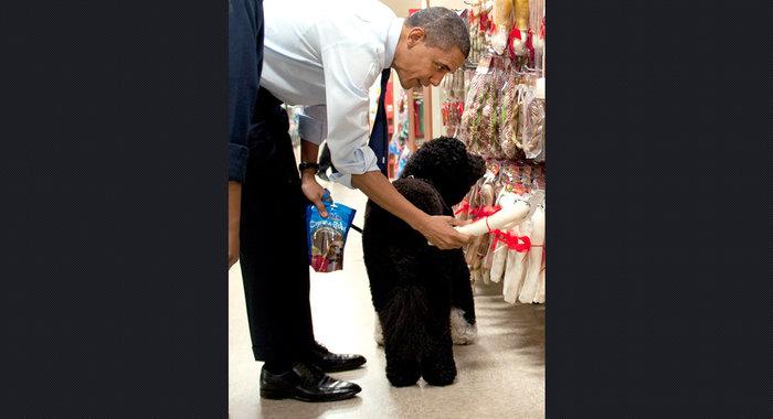 Ο σκύλος των Ομπάμα που κάνει «άνω κάτω» το Λευκό Οίκο - εικόνα 7