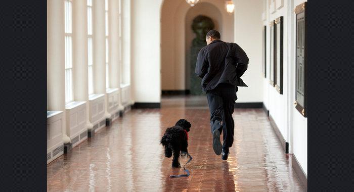 Ο σκύλος των Ομπάμα που κάνει «άνω κάτω» το Λευκό Οίκο - εικόνα 9