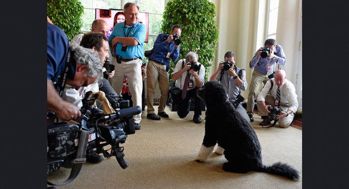 Ο σκύλος των Ομπάμα που κάνει «άνω κάτω» το Λευκό Οίκο - εικόνα 10