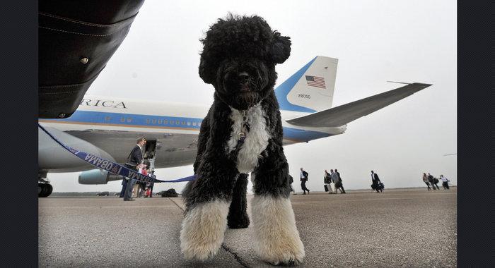 Ο σκύλος των Ομπάμα που κάνει «άνω κάτω» το Λευκό Οίκο - εικόνα 13