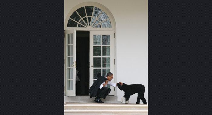 Ο σκύλος των Ομπάμα που κάνει «άνω κάτω» το Λευκό Οίκο - εικόνα 14